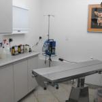 Animal Hospital Tucson Surgery