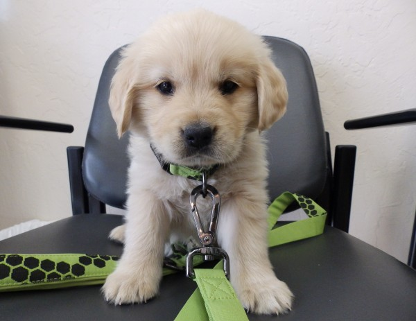 New Puppy at Rosemont Pet Clinic
