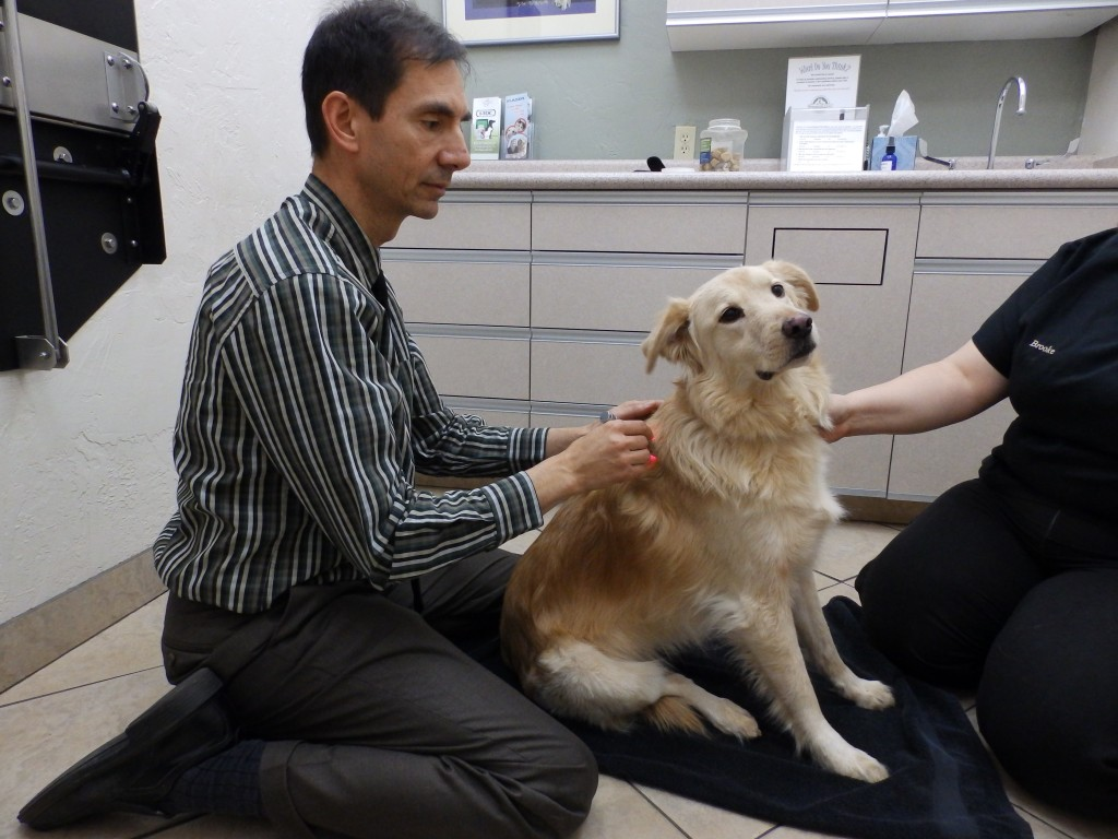 Tucson Veterinarian Acupuncture